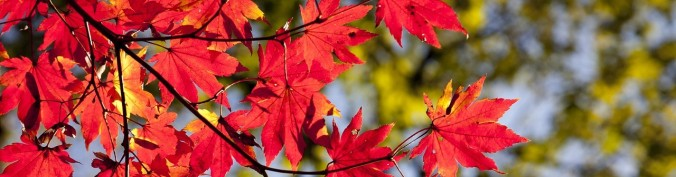 autumn-leaves-2789234_1280 (2)